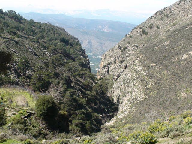 Thripti Forest and Plateau